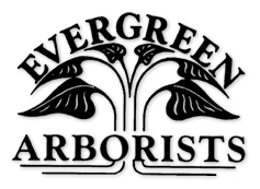 Evergreen Arborists