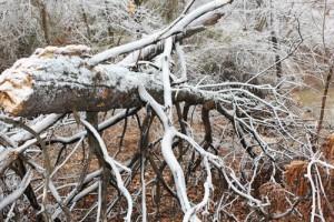Winter Storm Tree Damage